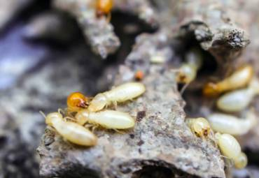 Why Your Home Needs a Termite Inspection