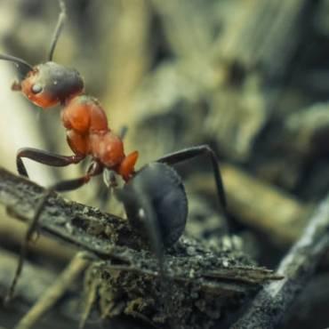Preventative Fire Ant Control