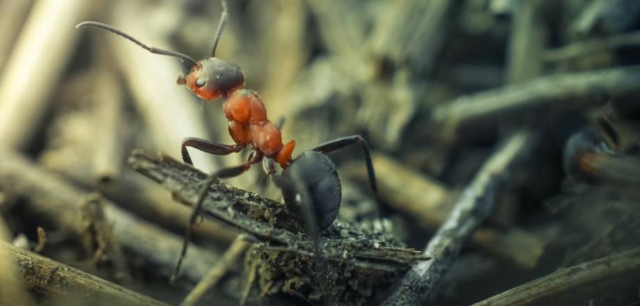 Preventative Fire Ant Control Prohealth Pest Control