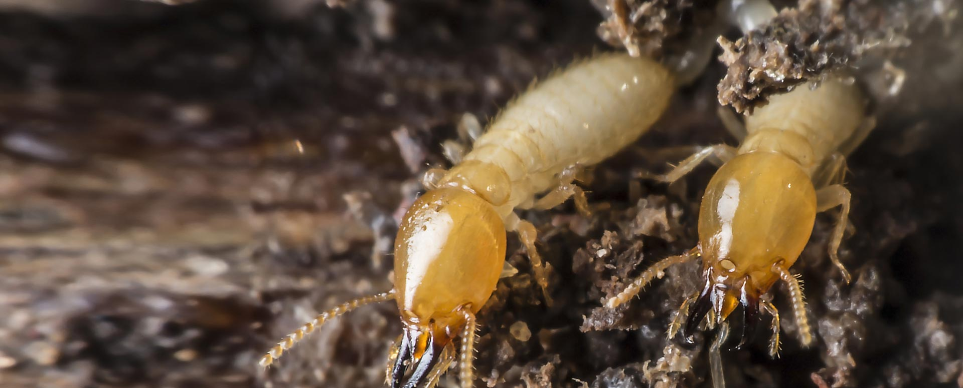 Prohealth Pest Control Eliminate Termites