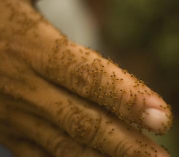 termite-control-hand