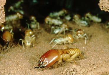 Termite Services for the Summer