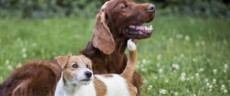 Choose Pest Control in Clearwater for Your Pets!
