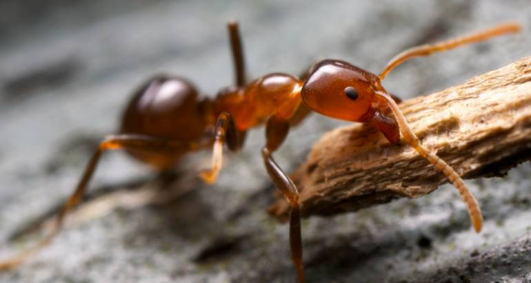 Prevent Ants from Colonizing Your Property