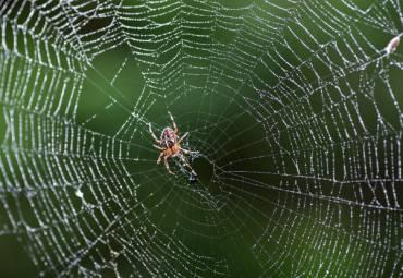 How do You Properly Treat a Spider Bite