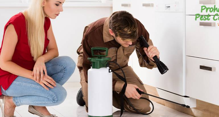 Why Natural Pest Control Solutions Are More Effective than Conventional Pest Control