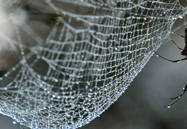 5 Interesting Facts about Spiders and Spider Control
