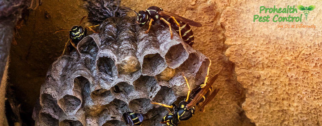 Wasp Control: Are Wasps a Serious Threat to my Property?