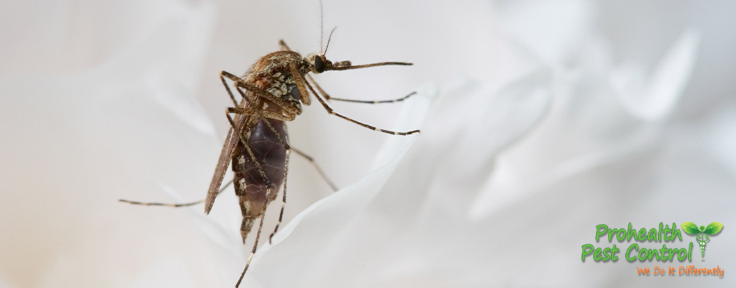 How to Get Rid of Mosquitoes Near Your Office Building