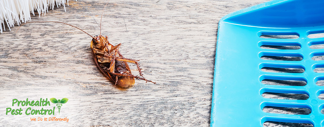 Office Pest Control: Pests You May Find in Your Office Building