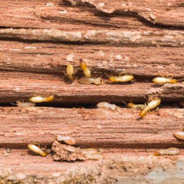 When is Termite Season in Florida