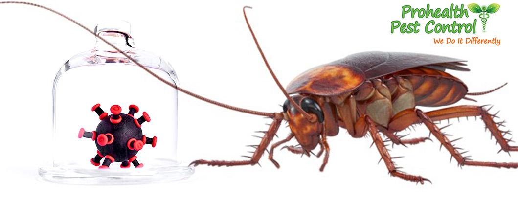 Cockroach Infestation Danger: Do Roaches Carry Disease?