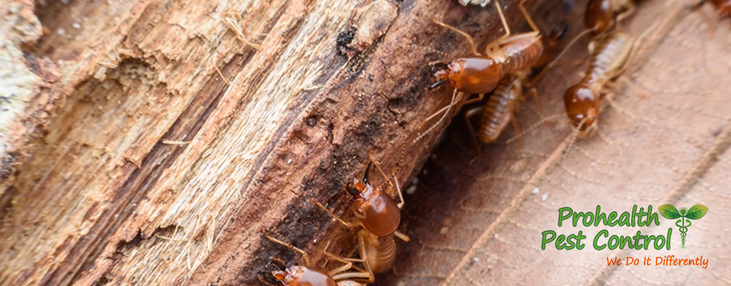 How Often Should You Schedule a Termite Inspection?