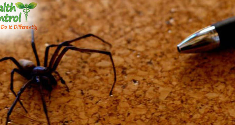 How to Get Rid of Spiders in Your Office Building