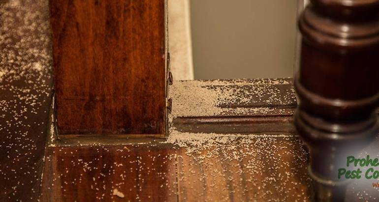 Subterranean Termite Treatment: How to Deal with Termites on Your Property