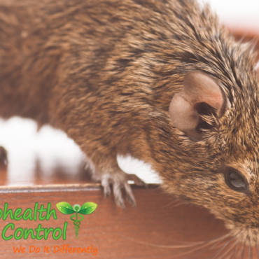 Why Commercial Rodent Control is Necessary for Employee Safety