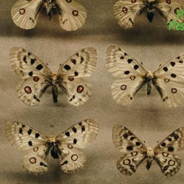 How to Prevent Moths from Infesting Your Property