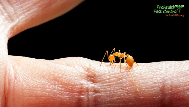 How to Treat an Ant Bite Properly and Safely