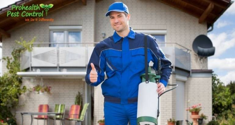 Why You Should Choose Non-Toxic Pest Control for Your Home