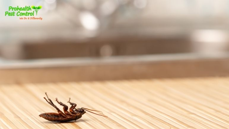 How to Get Rid of Cockroaches in Kitchen Cabinets