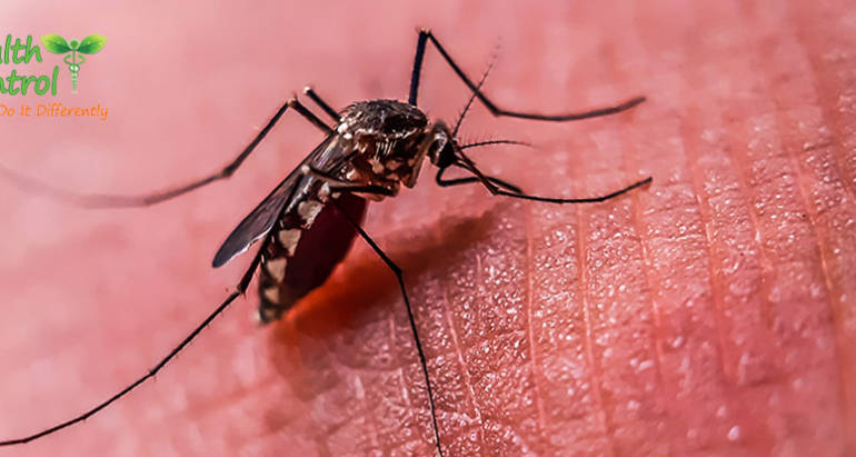 How to Keep Mosquitoes Away from Your Property During the Summer
