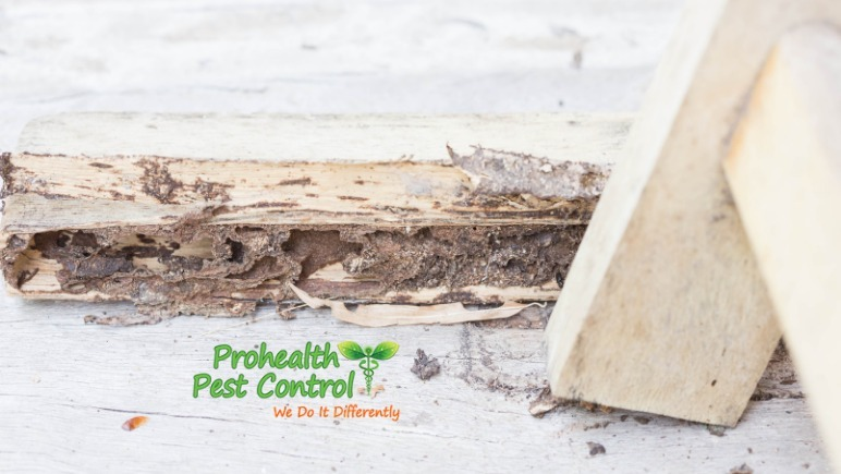 How Can Homeowners Check for Termites?