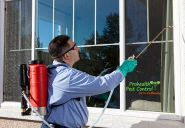 Why Organic Solutions Are Perfect for Commercial Pest Management