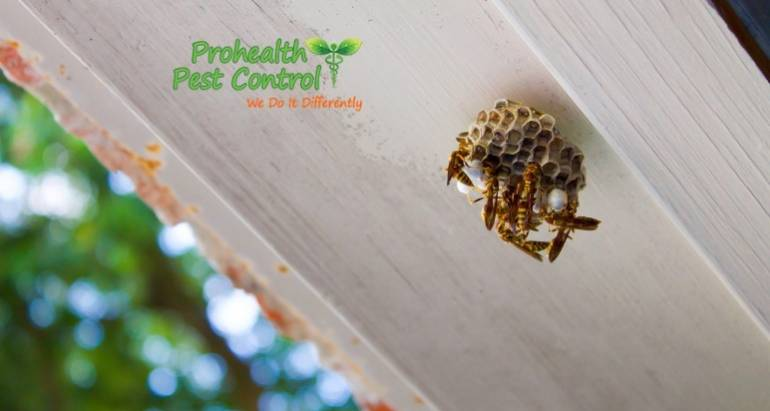 Common Types of Pests Found on Commercial Properties