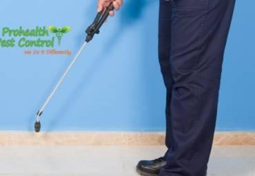 Preventative Pest Control Measures for Commercial Properties