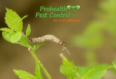Green Pest Control: How to Deal with a Slug Infestation in Your Garden