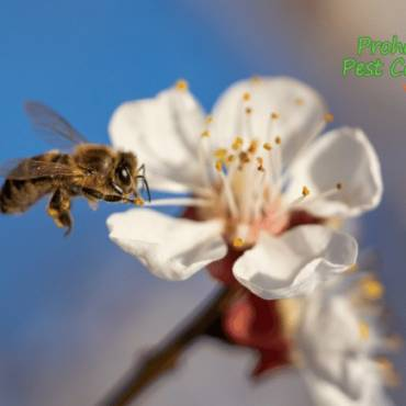 Pest Control for Bees: Why it's Important to Protect Bees