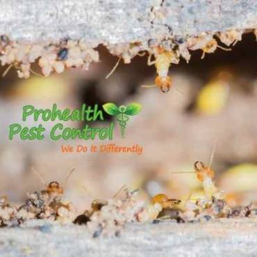 What are the Best Ways to Prevent Termites in Your Home?