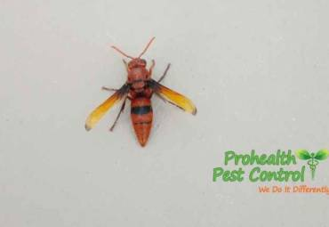 Are Wasps Attracted to Light?