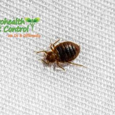 How do You Do Laundry Infested with Bed Bugs?