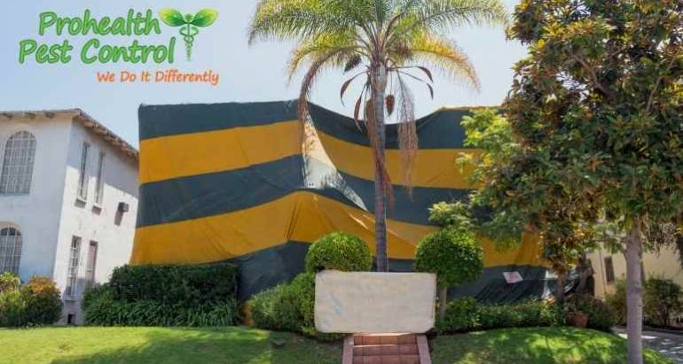 Is Tentless Termite Treatment More Effective than Tenting for Termites?