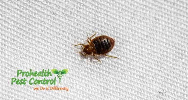 What is the Most Effective form of Bed Bug Treatment?